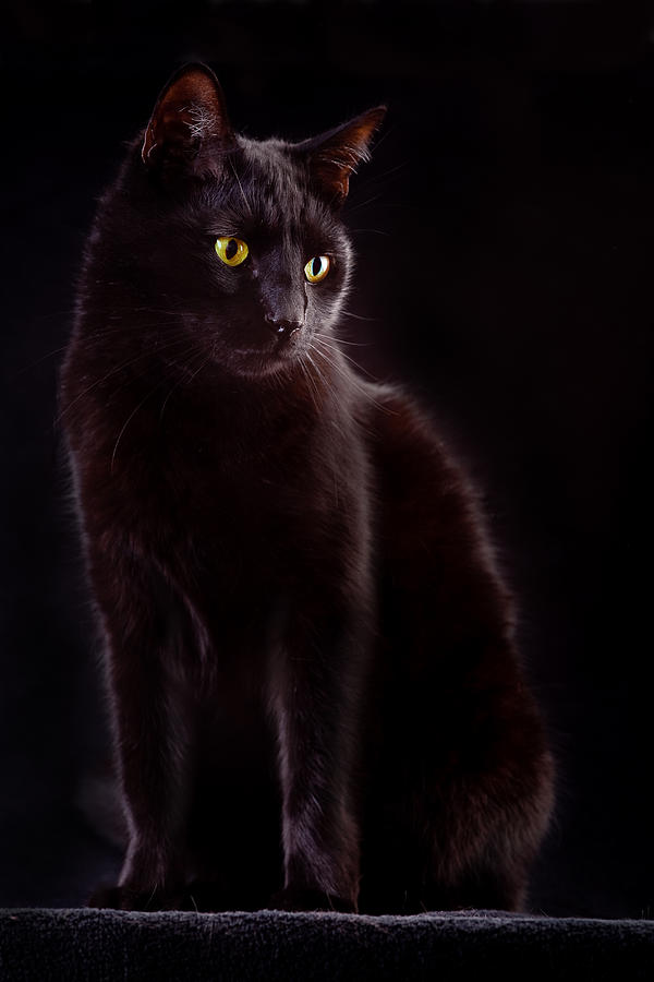 Black Cat Photograph  - Black Cat Fine Art Print