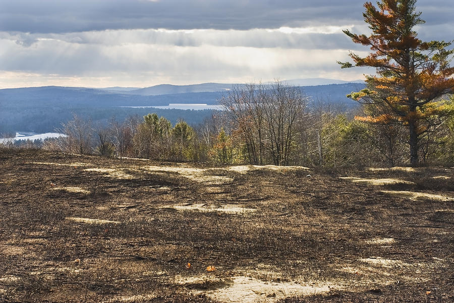 Blueberry Photograph - Burnt Blueberry Field In Maine by Keith Webber Jr