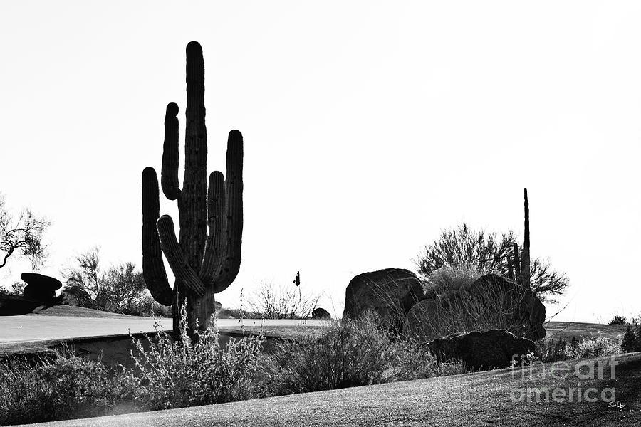 Black &white Photograph - Cactus Golf by Scott Pellegrin