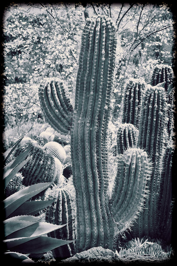 Cactus Photograph - Cactus Land by Kelley King