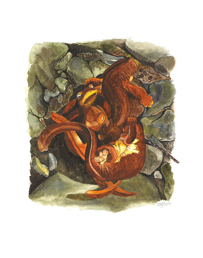 California Newt Mating Ball Painting  - California Newt Mating Ball Fine Art Print