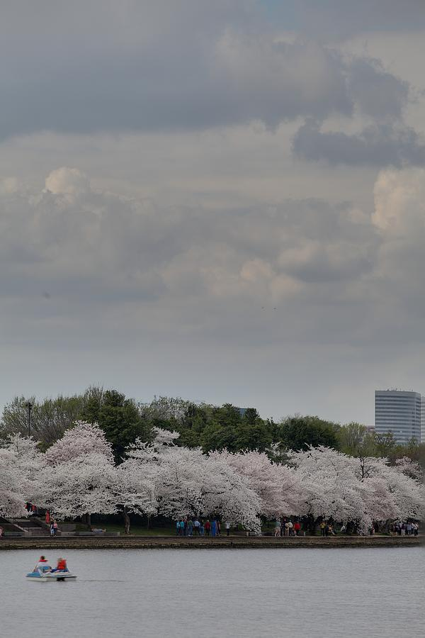America Photograph - Cherry Blossoms - Washington Dc - 011311 by DC Photographer