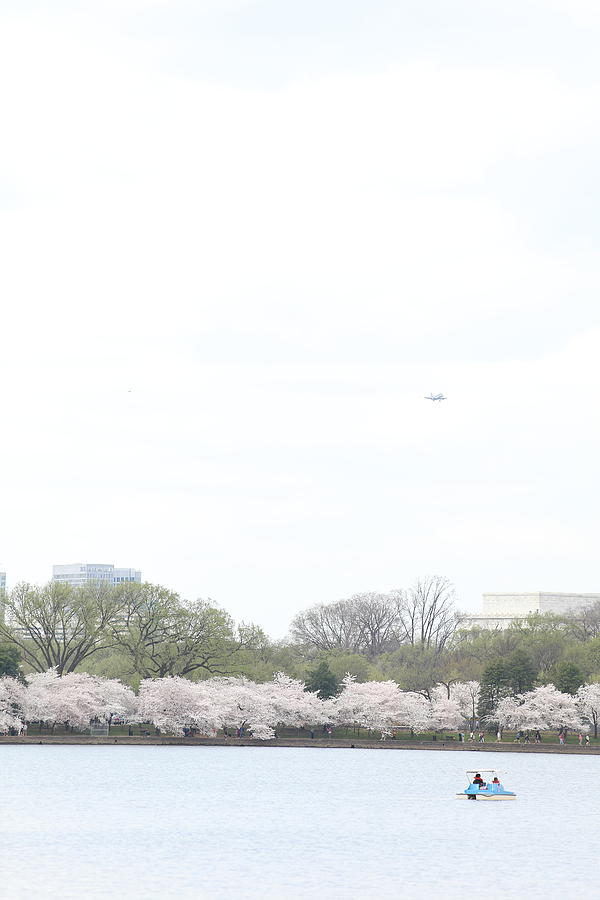 Cherry Blossoms - Washington Dc - 011320 Photograph