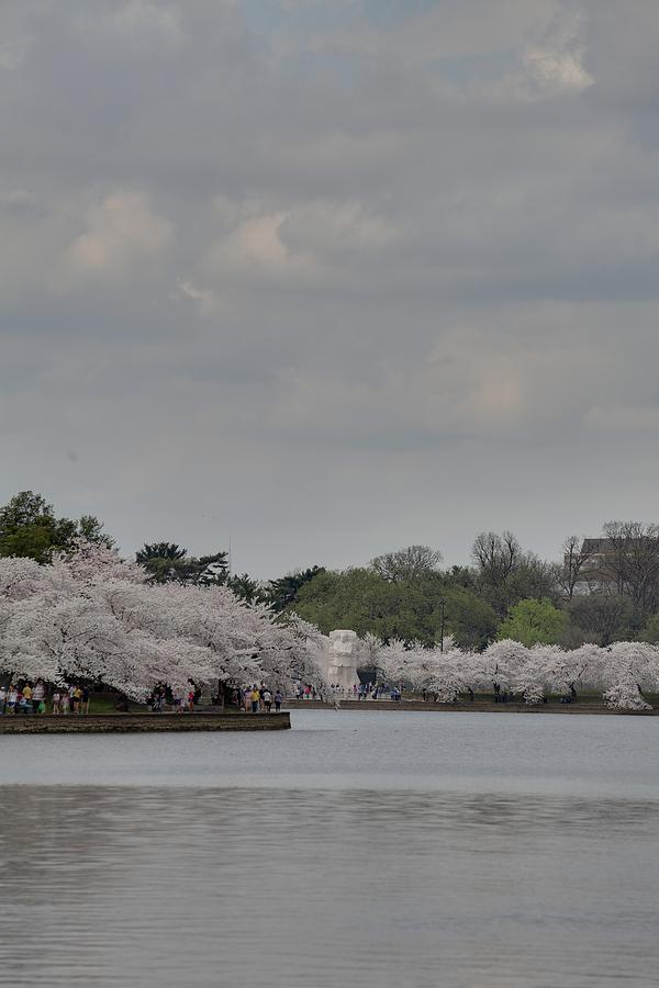 Cherry Blossoms - Washington Dc - 011335 Photograph