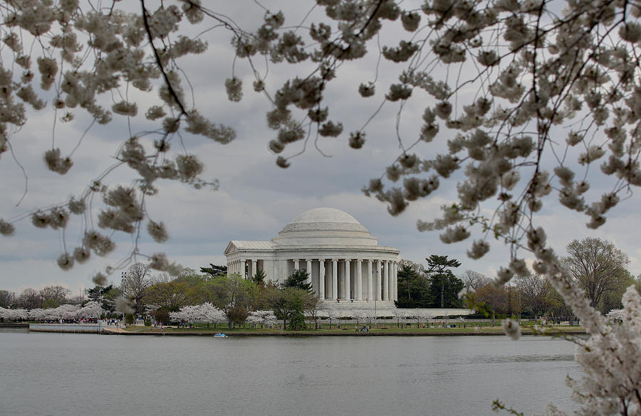 Cherry Blossoms With Jefferson Memorial - Washington Dc - 01137 Photograph