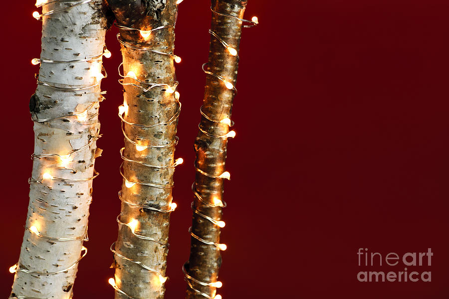 Christmas Lights On Birch Branches Photograph