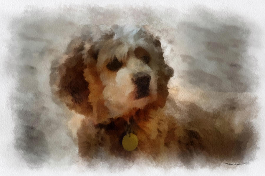 Cocker Spaniel Photo Art 01 Photograph