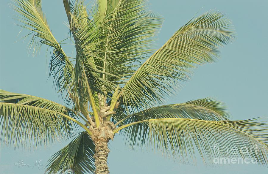 Cocos Nucifera - Niu - Palma - Poolenalena Beach Maui Hawaii Photograph