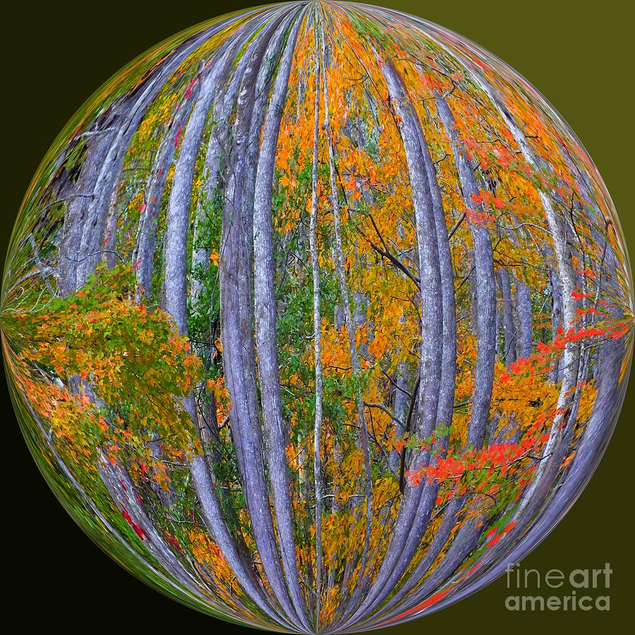 Colorful Fall Forest Photograph  - Colorful Fall Forest Fine Art Print