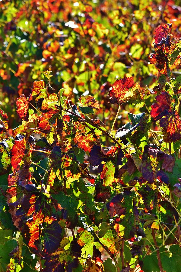 Colors Of Autum.... Photograph  - Colors Of Autum.... Fine Art Print
