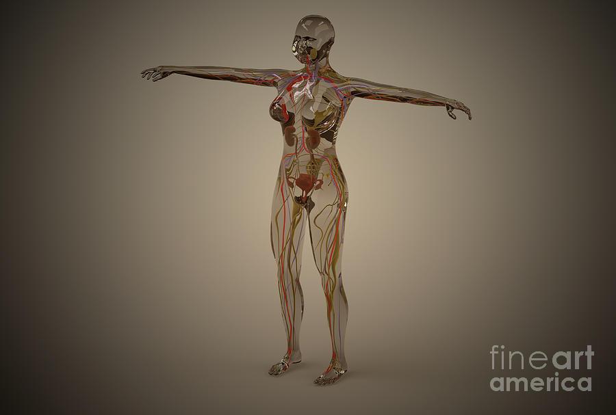 Conceptual Image Of Human Nervous Digital Art