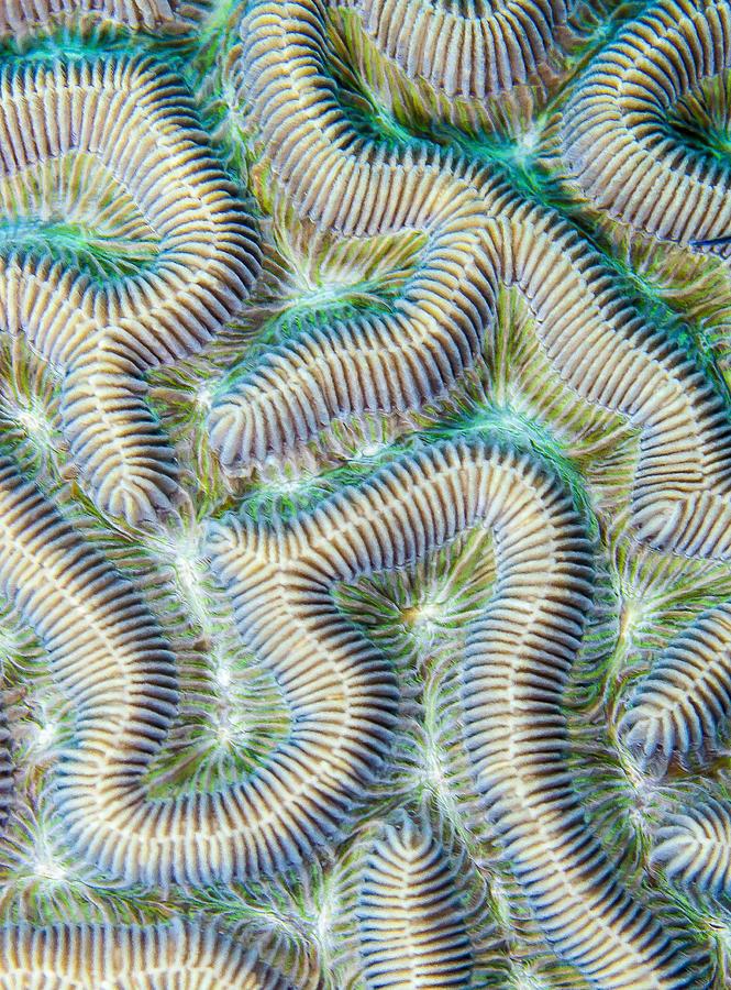 Coral Maze Photograph