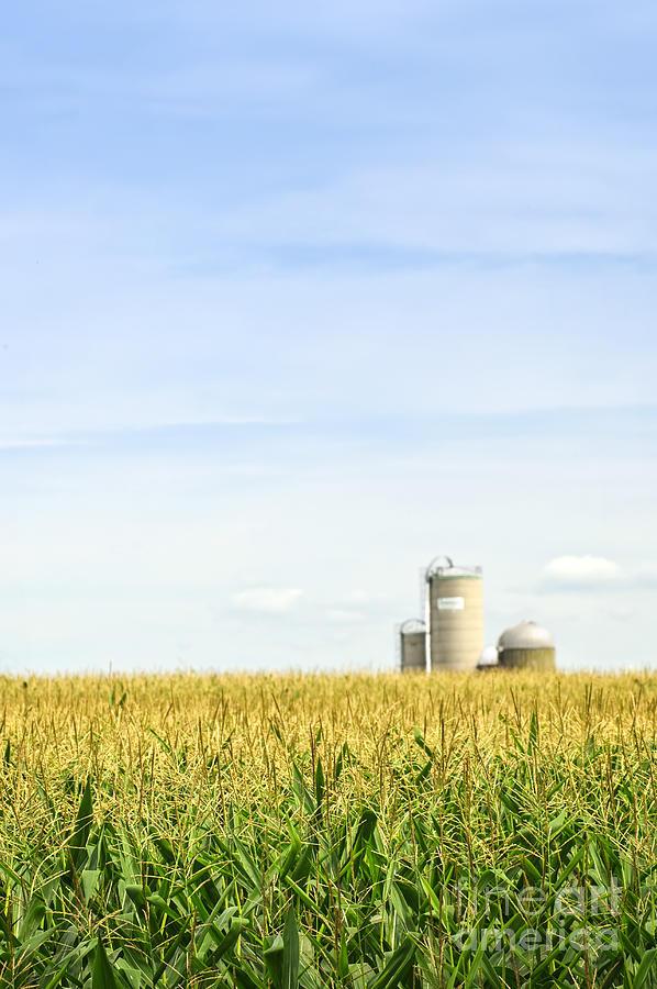 Corn Field With Silos Photograph