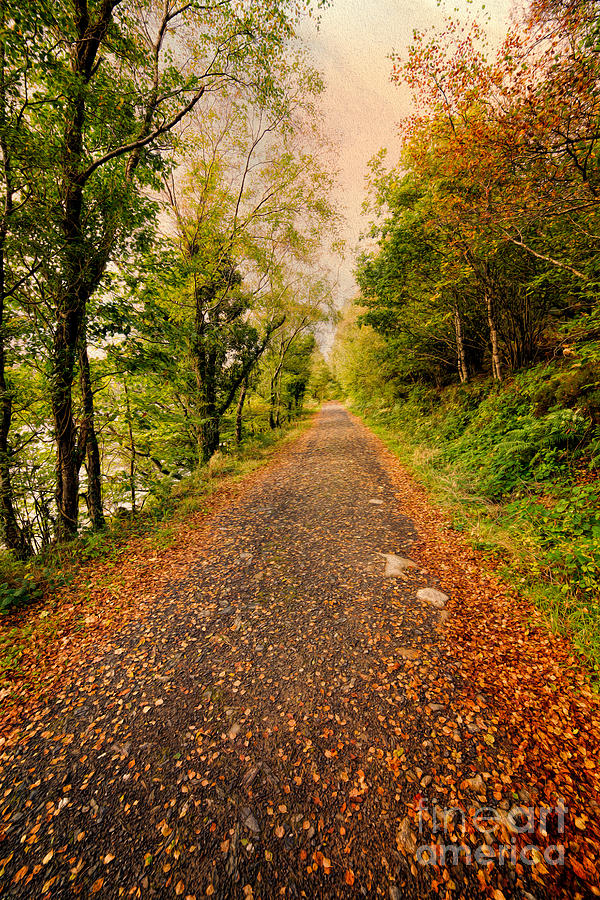 Hdr Photograph - Country Lane by Adrian Evans