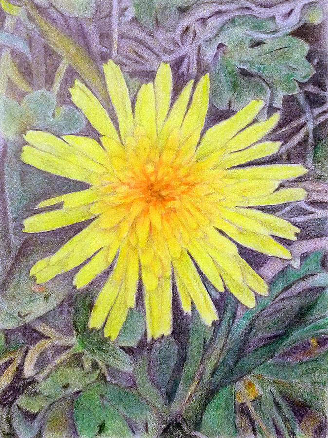 Flower Drawing - Dandelion by Linda Pope