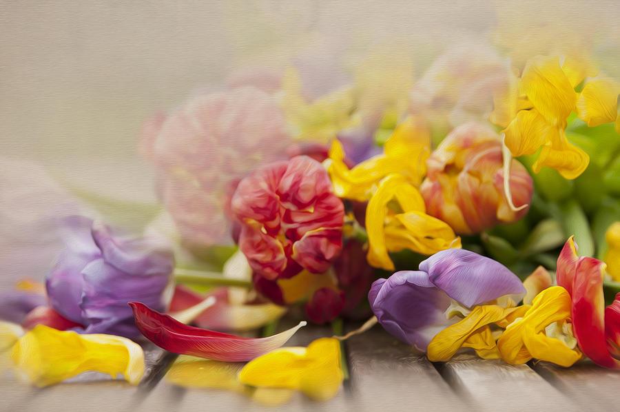 Dead Tulips Photograph