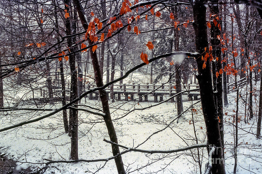 Indiana University Bloomington Bridge Bridges Tree Trees Red Leaves Leaf Snow Landscape Landscapes Photograph - Early Snow by Bob Phillips