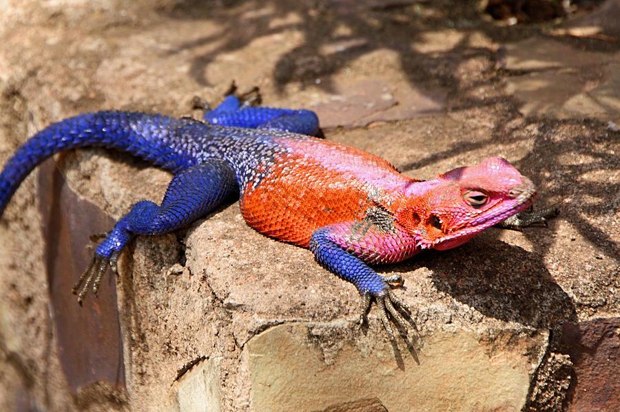 reptile identification quiz by sgase