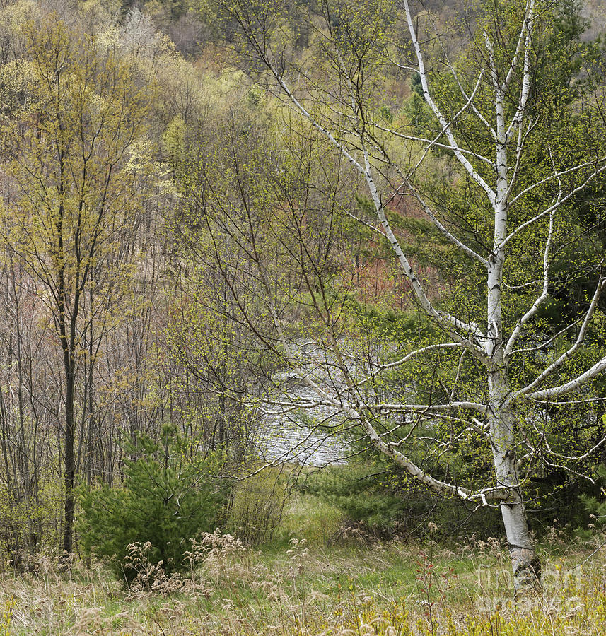 Easton Mountain Trees And Pond Photograph