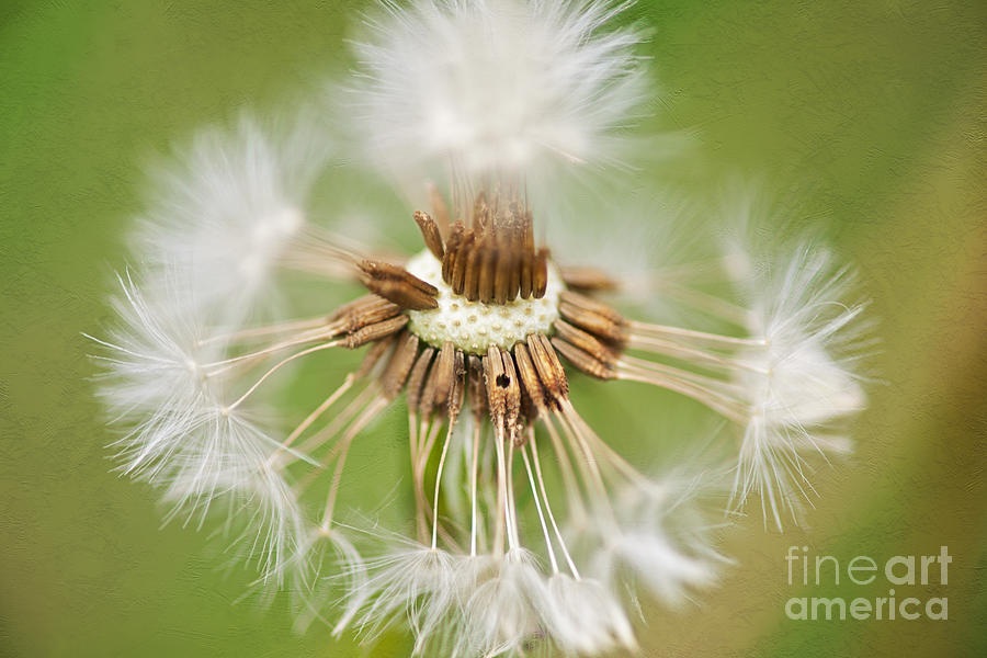 Feather Dance Photograph  - Feather Dance Fine Art Print