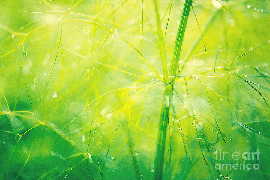 Fennel Abstract Photograph