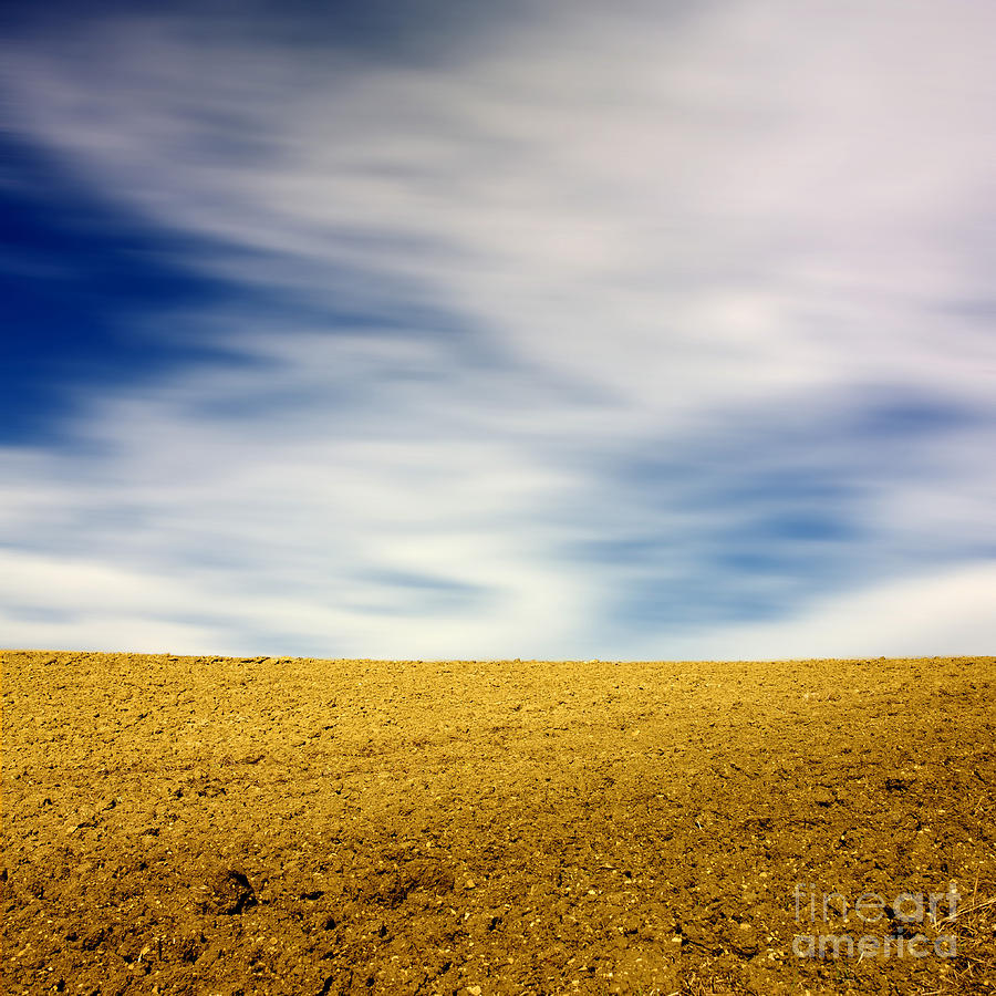 Field  Photograph  - Field  Fine Art Print