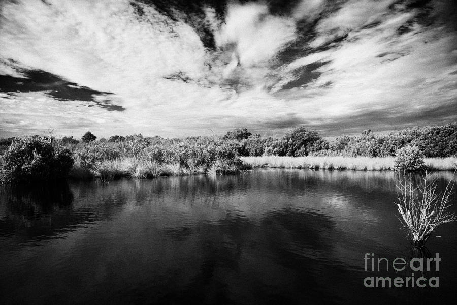 Florida Photograph - Flooded Grasslands And Mangrove Forest In The Florida Everglades Usa by Joe Fox