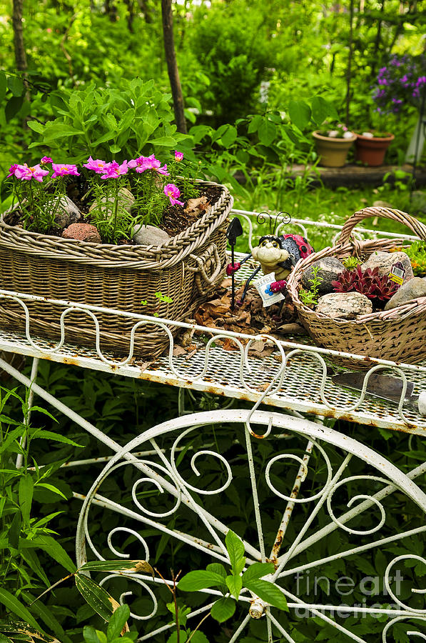 Flower Cart In Garden Photograph