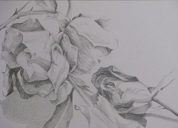 Flower Study 3 Drawing