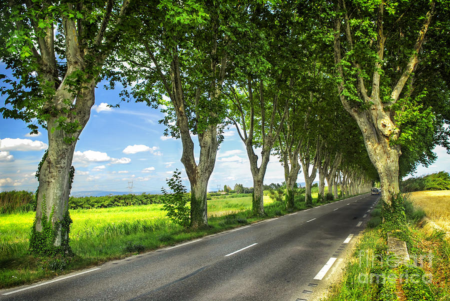 French Country Road Photograph  - French Country Road Fine Art Print