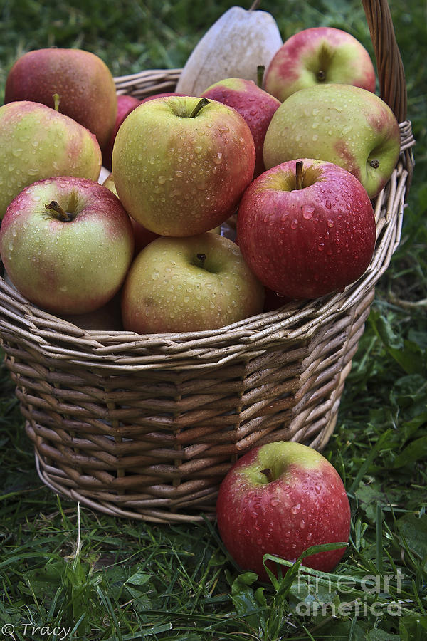 Fresh Apples Photograph