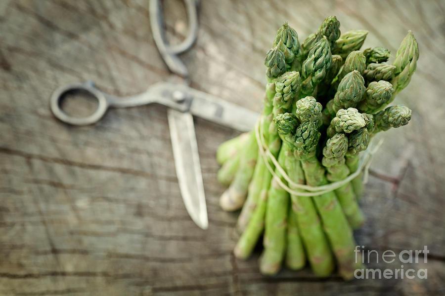 Freshly Harvested Asparagus Photograph