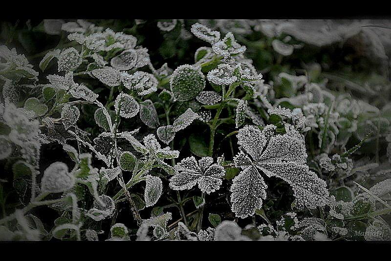 Nature Photograph - Frost by Marija Djedovic