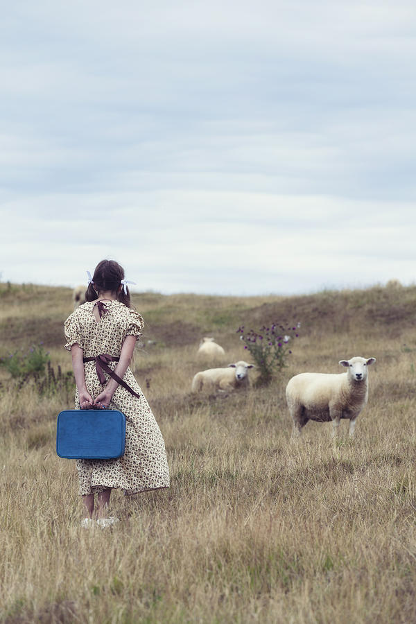 Girl With Sheeps Photograph