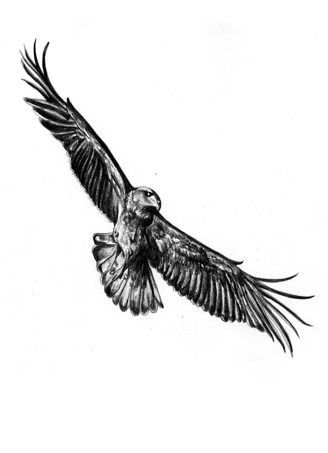 How To Draw Flying Eagle