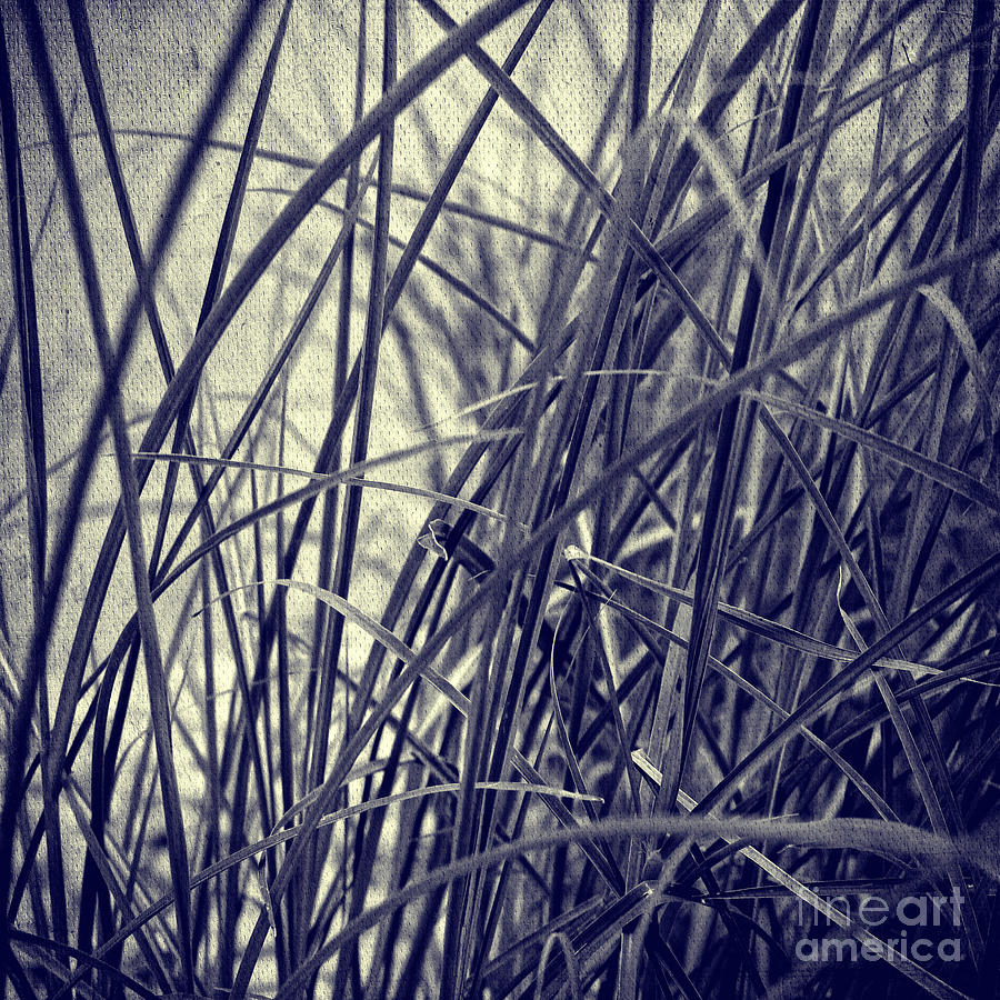 Grass Photograph  - Grass Fine Art Print