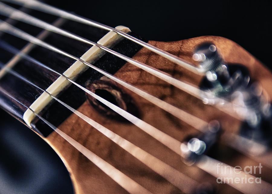 Guitar Strings Photograph