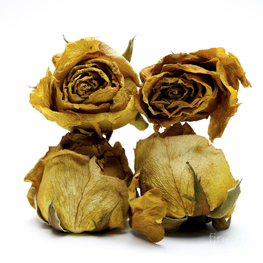 Heap Of Wilted Roses Photograph