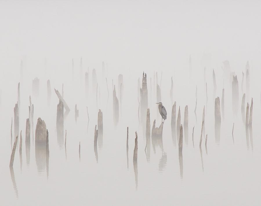 Heron On A Foggy Day Photograph