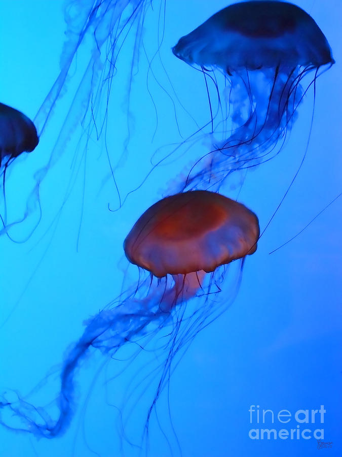Jellyfish 4 Photograph