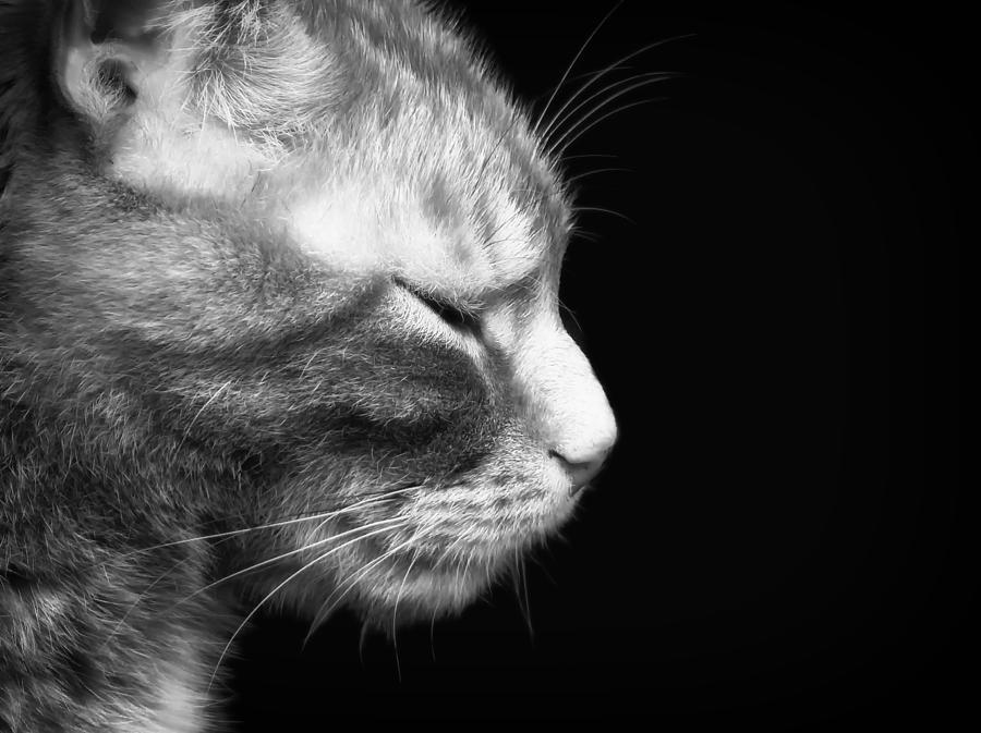 Just A Catnap Photograph