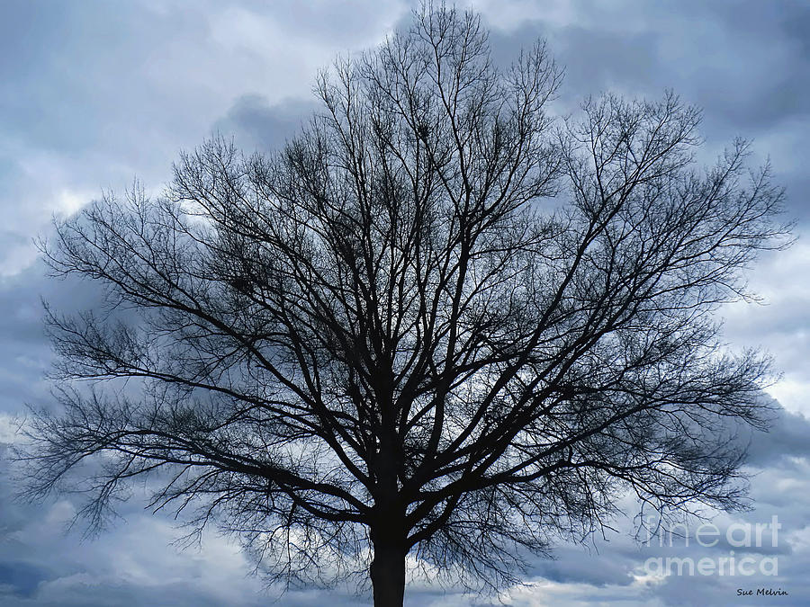 Just A Gray Blue Day Photograph  - Just A Gray Blue Day Fine Art Print