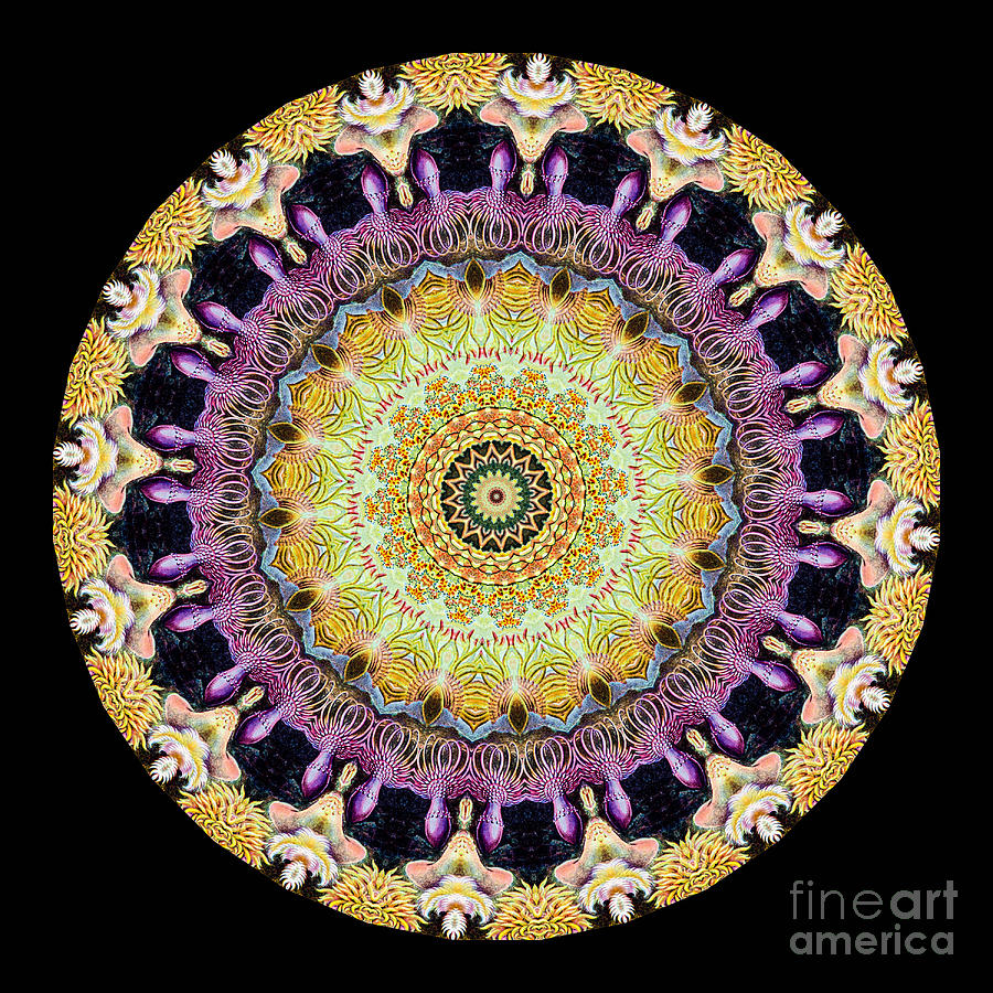 Kaleidoscope Ernst Haeckl Sea Life Series Photograph
