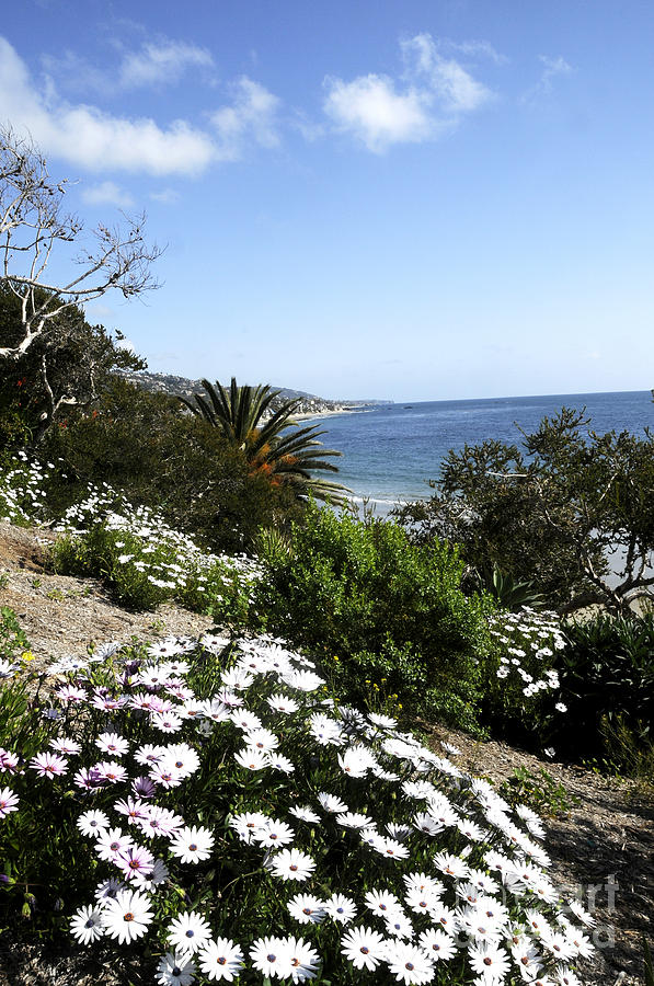 Laguna Beach  Photograph  - Laguna Beach  Fine Art Print