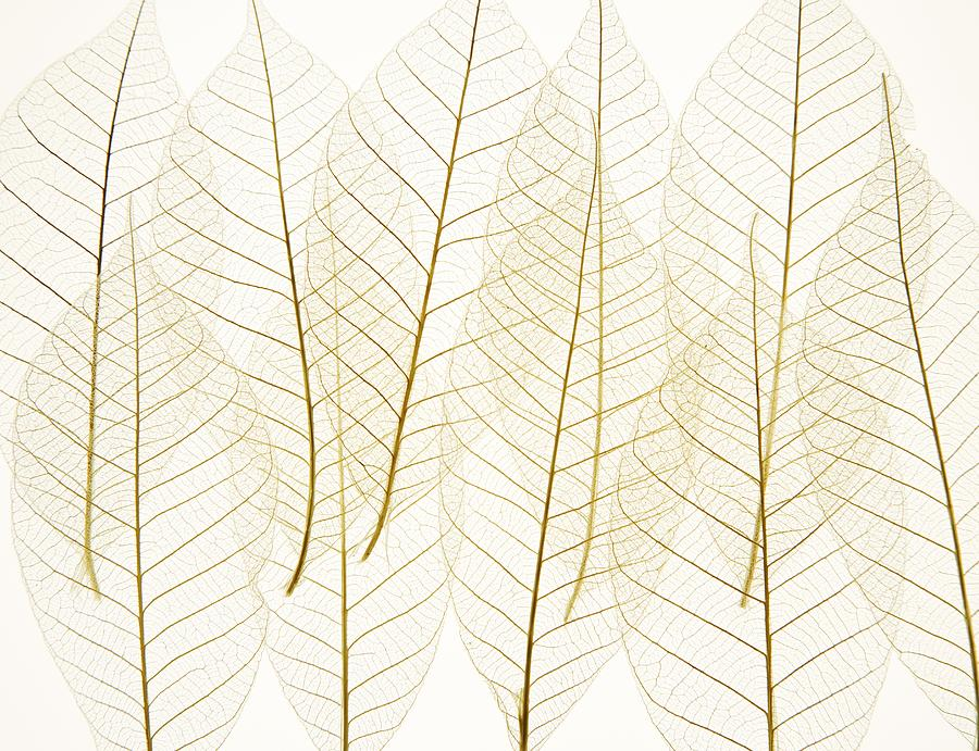 Layered Leaves Photograph  - Layered Leaves Fine Art Print