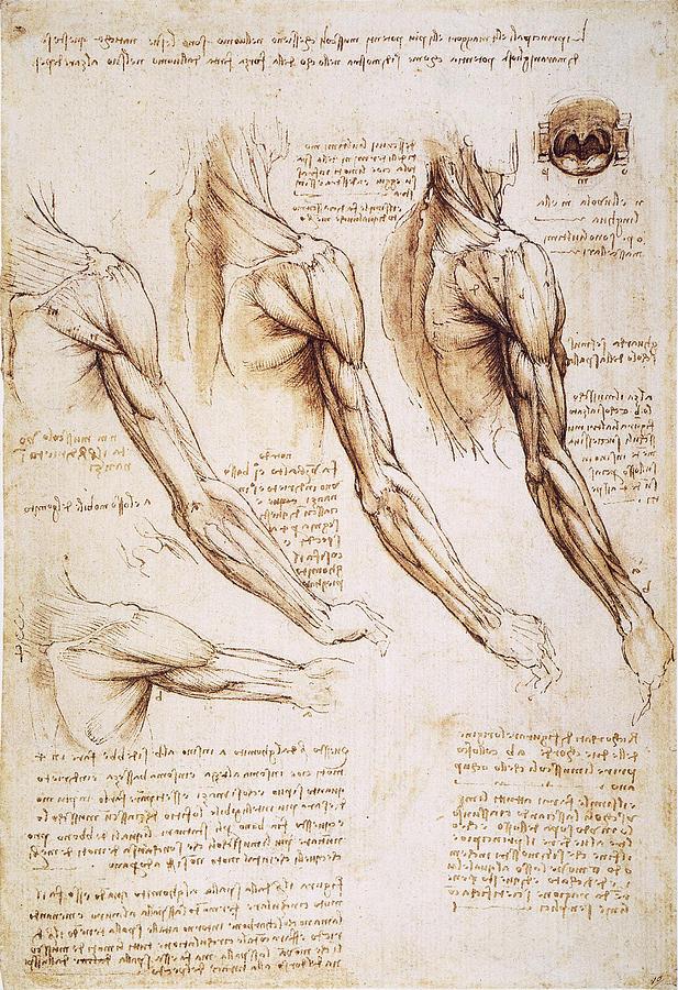 Leonardo: Anatomy, 1510 Photograph