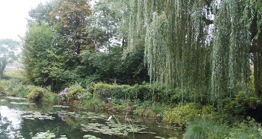 Lilly Pond  Photograph