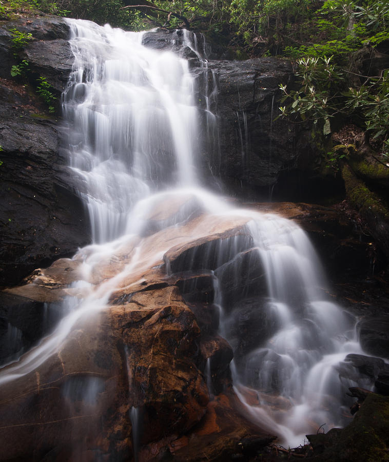 Log Hollow Falls Photograph