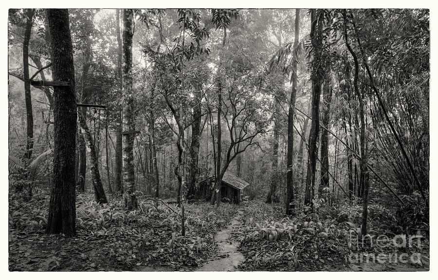 Lonely Hut In Deep Forest Photograph  - Lonely Hut In Deep Forest Fine Art Print