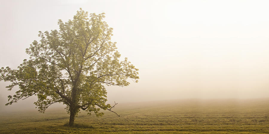 Tree Photograph - Lost In The Fog by Andrew Soundarajan
